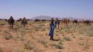 Excursions balade chameaux